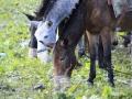 041_2014-09-17_Pferde.jpg
