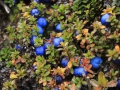 293_2014-09-28_blau.jpg