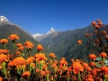 118_2015-11-21_Nepal_Chhomrong copy.jpg