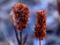 190_2015-12-23_Nepal_Iceflowers copy.jpg