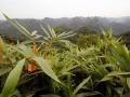 063_2014-11-13_Ngu Lam Peak copy.jpg